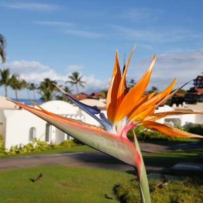 My Maui Hawaii Tips